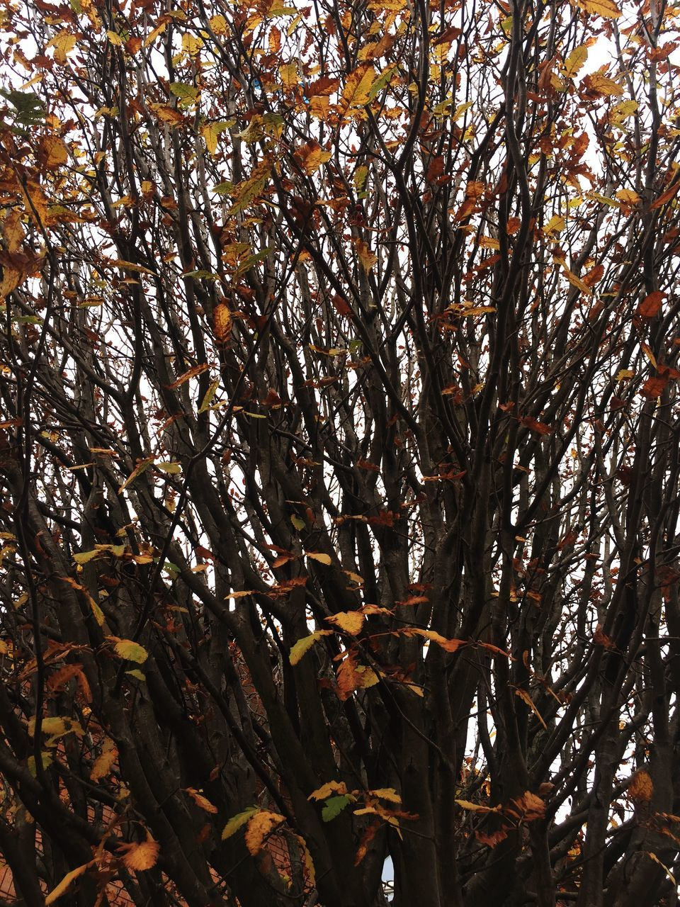 tree, branch, nature, beauty in nature, growth, autumn, leaf, low angle view, no people, outdoors, day, change, tranquility, fragility, flower, freshness, close-up, sky