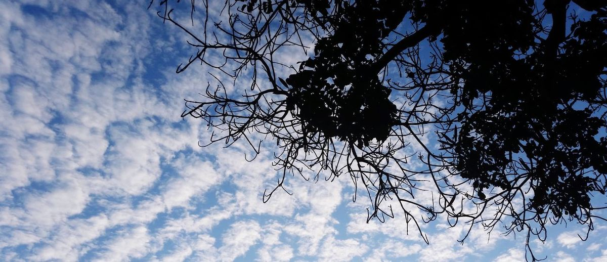 Sky Low Angle View Nature Cloud - Sky Tree No People Beauty In Nature Day Outdoors Branch Blue Growth Flower Close-up Freshness EyeEmNewHere