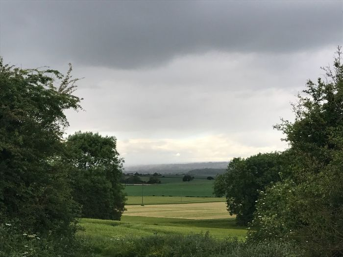 A storm brewing over Badsworth, Yorkshire, England. Tree Cloud - Sky Sky Nature Tranquility Growth Tranquil Scene Field Grass Green Color Beauty In Nature Landscape Scenics Day No People Outdoors Freshness In May Yorkshire Green Color Farm Agriculture