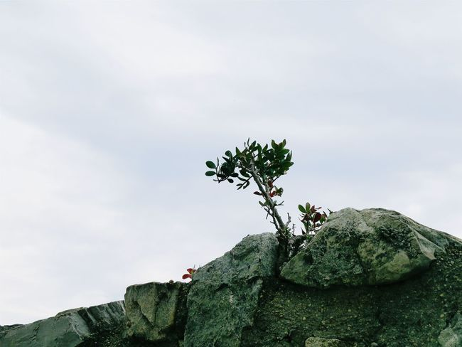 It really looks like a tree. Actually, it's a small branch growing on stone Branch Leaves Castle Ruin Wall Tree Sky Close-up Cloud - Sky Green Color Plant Life Growing Rock Formation Mountain Scenics Non-urban Scene Rock - Object