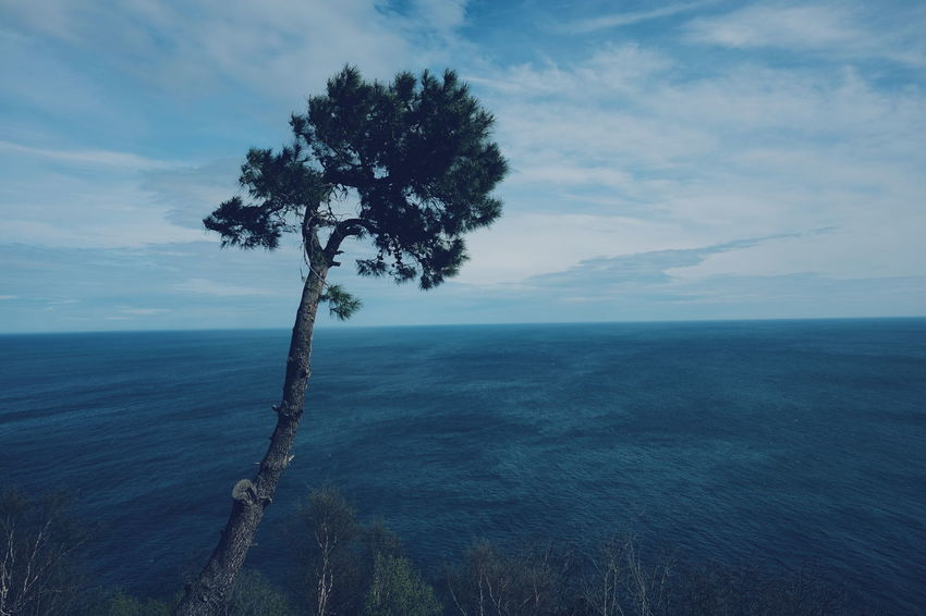 Tree Sea Rural Scene Tree Trunk Single Tree Sky Close-up Horizon Over Water Landscape Cloud - Sky Shore Idyllic Remote Calm Scenics Tranquil Scene Scenic View Non-urban Scene