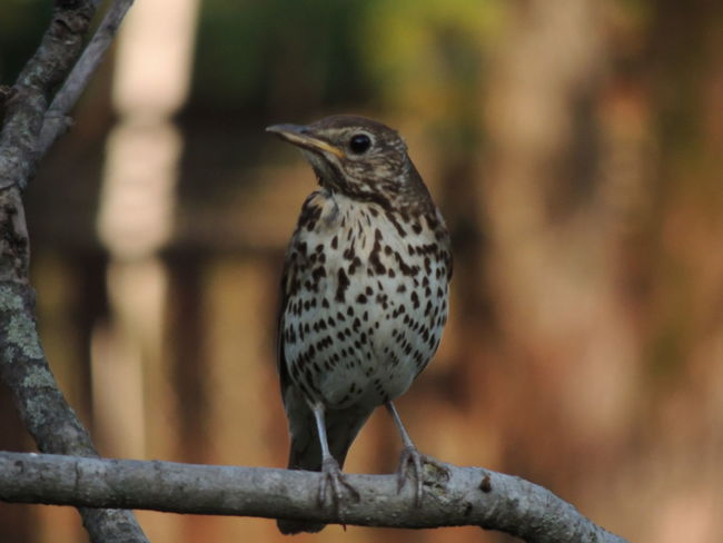 Animal Animal Themes Animal Wildlife Animals In The Wild Beauty In Nature Bird Branch Close-up Day Focus On Foreground Looking Looking Away Nature No People One Animal Outdoors Perching Plant Tree Vertebrate Woodpecker