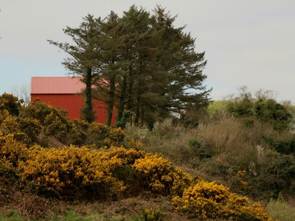 The red barn Farm Building Farming Barn Painted Red Tree Gorse Bushes Gorse Flowers Red Plant Nature Growth No People Sky Outdoors Built Structure Day Architecture Mizen Peninsula Wildatlanticway West Cork Ireland