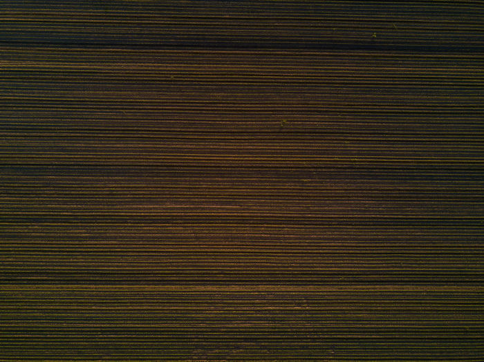 Aerial view of corn field furrows in cultivated maize field Aerial View Agriculture Backgrounds Corn Crop  Drone  Drone Photography Dronephotography Droneshot Field Furrows Maize Point Of View POV Textured