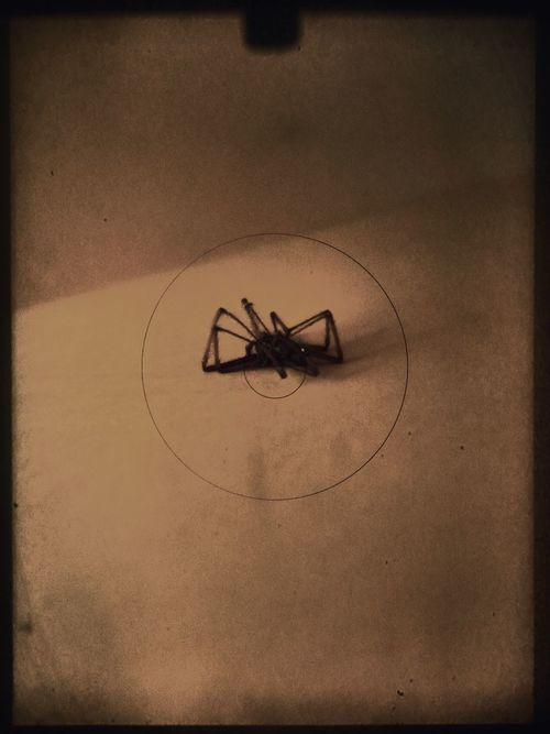 ArtWork Creativity Film Spider Animal Themes Art Artful Black Close-up Creative Day Dead Dead Spider Film Photography Focus Indoors  Insect Monochrome No People Noir One Animal Still Life Technology