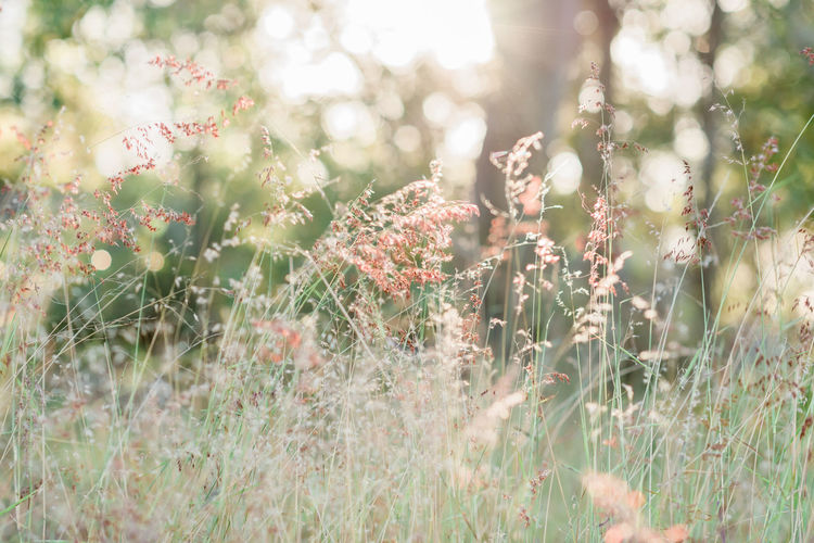 Sunlit Grass Grass Beauty In Nature Bright Day Field Flower Flowering Plant Fragility Freshness Grass Green Color Growth Land Nature No People Outdoors Plant Selective Focus Sunlight Tranquil Scene Tranquility Vulnerability