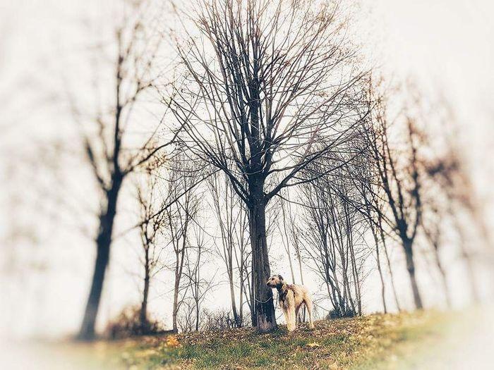 Bare Tree Tree
