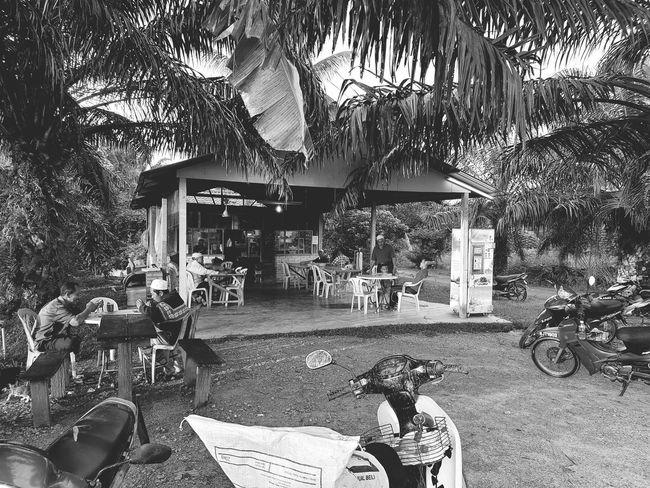 Under Palmtrees Kedai Tepi Sawah Warung Kopi Kg Peket 60 Kedai Kopi Kampung