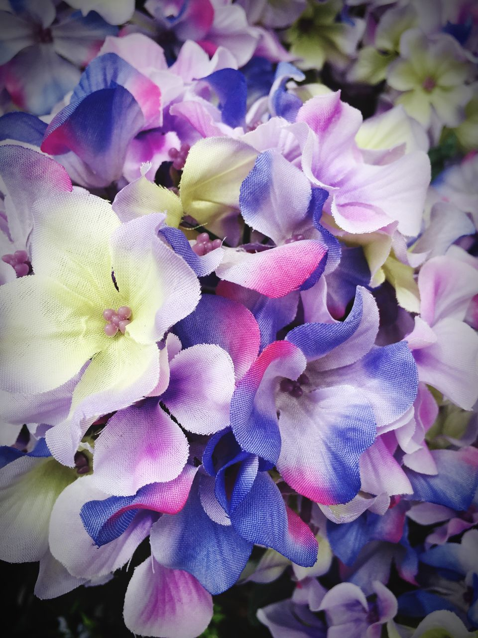 flower, petal, beauty in nature, fragility, nature, flower head, plant, freshness, no people, growth, hydrangea, close-up, blooming, day, outdoors, springtime