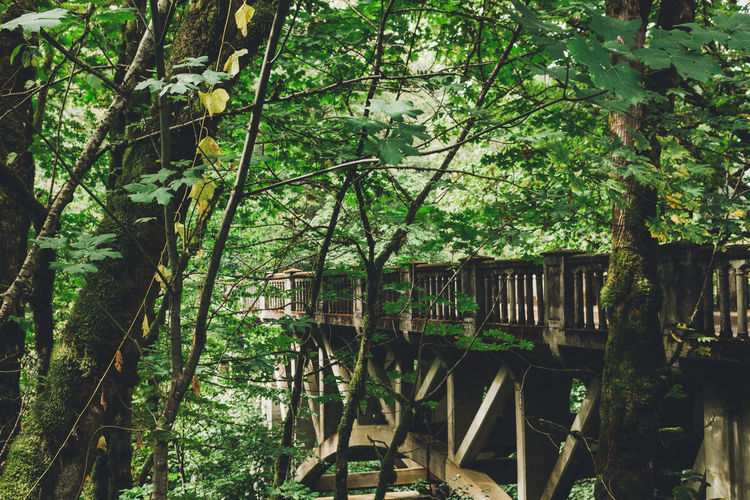 Adventure Architecture Bridge Day Forest Growth Hiking Hikingadventures Nature No People Outdoors Trail Tree