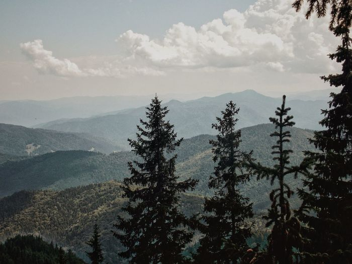 Scenic view of pine trees and mountains against sky