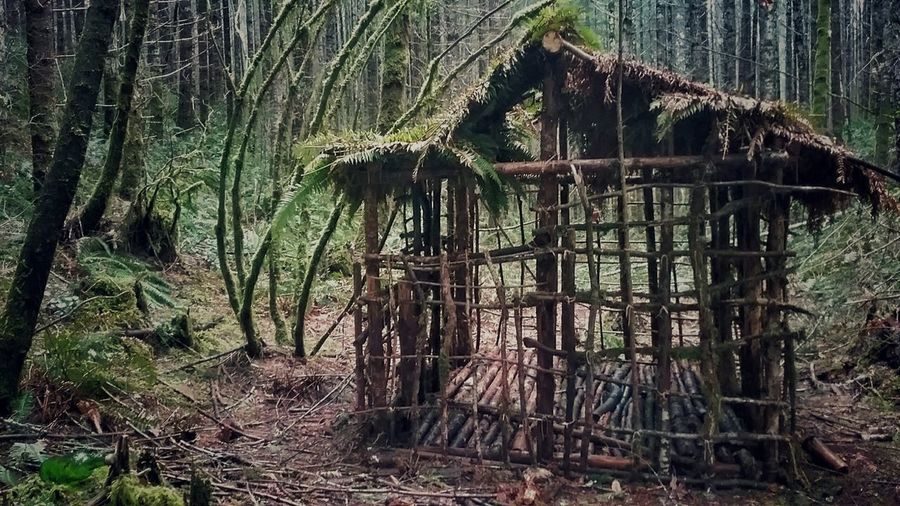 Someone worked hard to make this little Home In The Woods Outdoors No People Day Tree Nature Green Outside Photography Trees Rugged Style Hideaway Molalla River Oregon Hiking Adventures Discovering Places Old Cottage Cottage In The Woods Man Made Structure Manmade Left Behind To Nature Grass Spring Summer Home The Secret Spaces Cabin In The Woods The Secret Spaces The Great Outdoors - 2017 EyeEm Awards