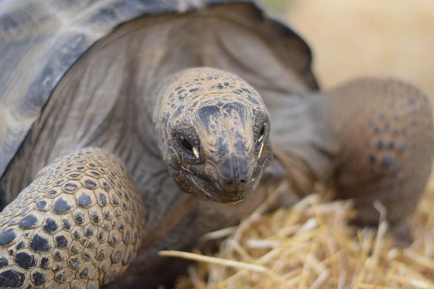 EyeEm Selects It is Mr Turtle to you. Animals In The Wild Animal Themes One Animal Nature No People Tortoise Tortoise Shell Outdoors Animal Wildlife