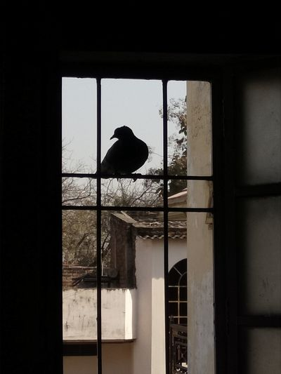 Window Silhouette Indoors  Window Frame Adults Only Animal Themes One Person Cage Day People One Man Only Adult Only Men EyeEmNewHere Summers Innovation Famous Popular Pegion
