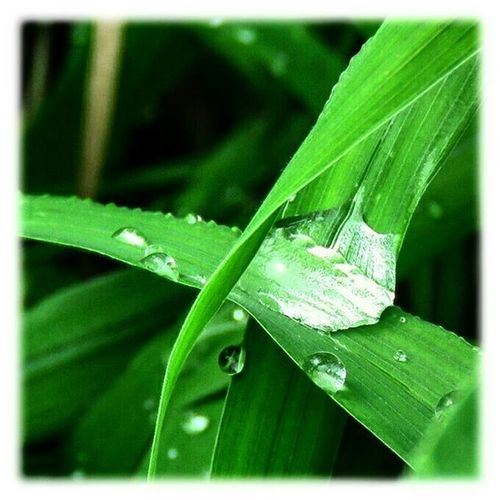 🌿 しばらく悪天候のようです🎶😉 A while is like a bad weather🎶😉 * * 草むら 雨粒 Grass RainDrop 風景landscape自然Nature 名古屋 Nagoya 日本 Japanaichi 眺め眺望VistaviewOutlook 展望景色綺麗爽やかlove_world worldbestgram skyigworld igworldclub foto_naturel 🌿 view_Japan_nagoya_mitu