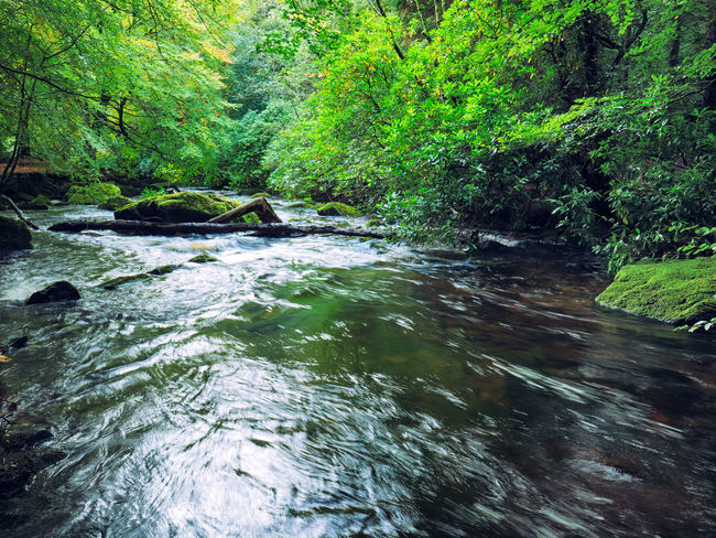 Northern Ireland Tollymore Forest Park Adventure Beauty In Nature Day Forest Green Color Growth Long Exposure Lush Foliage Moss Motion Nature No People Outdoors River Scenics Tranquil Scene Tranquility Tree Water Waterfall Waterfront