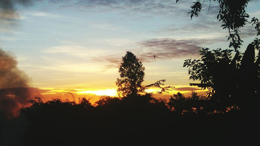 Tree Sunset Silhouette Pixelated Sky Cloud - Sky Plant