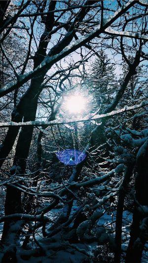 Glimpse of healing Nature Light Snow Happy winter wonderland