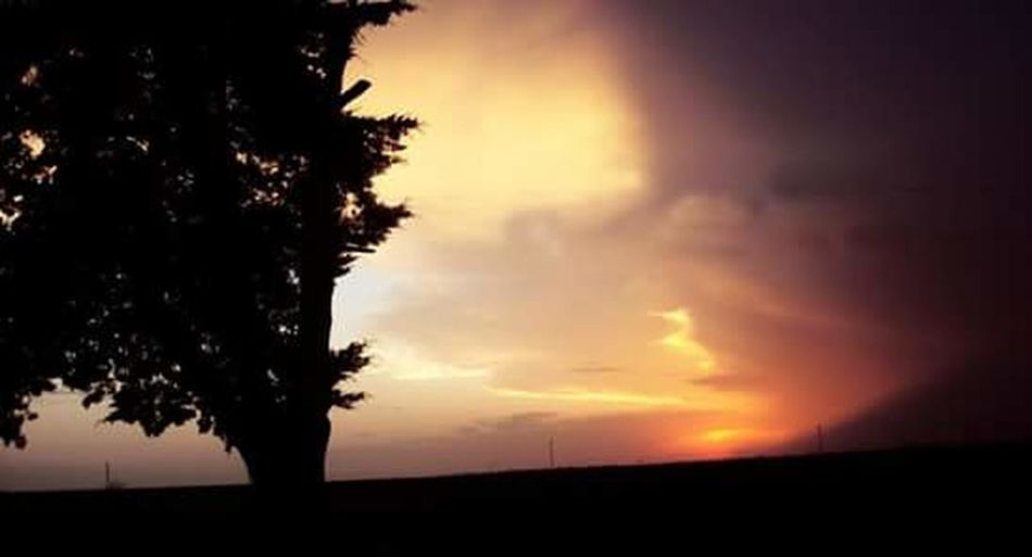 Sunset Tree Silhouette Dramatic Sky Nature Landscape No People Outdoors Rural Scene Cloud - Sky Beauty In Nature Scenics
