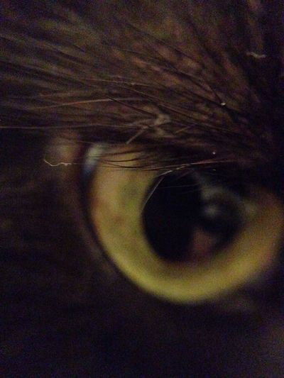 Cat Neko Furmagoo Cat Eyes Macro Nofilter No Filter