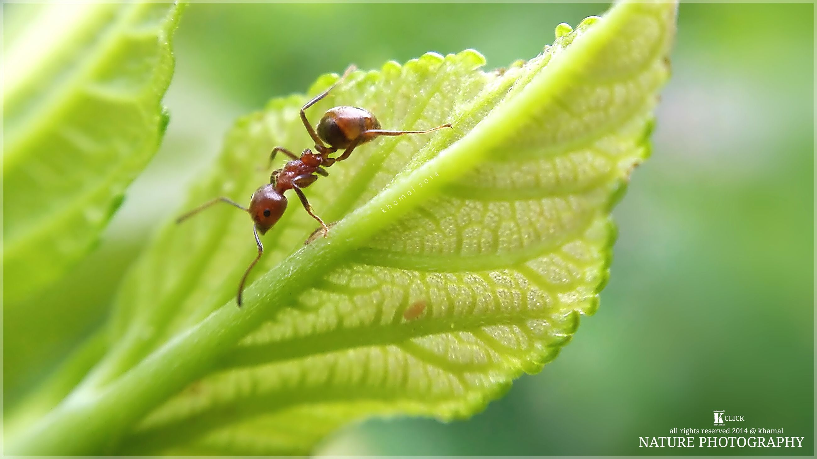 green color, insect, animal themes, animals in the wild, leaf, one animal, close-up, wildlife, focus on foreground, plant, selective focus, nature, growth, day, green, outdoors, no people, dragonfly, stem, beauty in nature