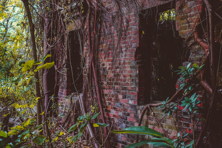 Plants growing in abandoned building