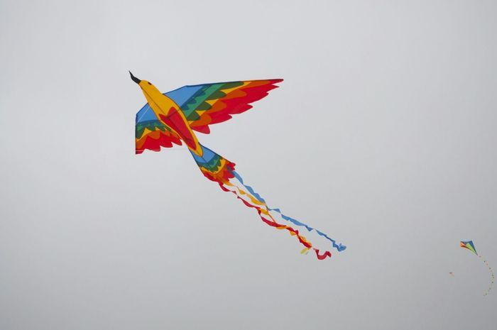 Cerf Volant Colors Bird