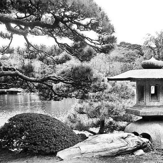 Paisaje Japones Paisaje Japon Japan Nature Photography Blanco & Negro  Park Japanese Culture Black & White