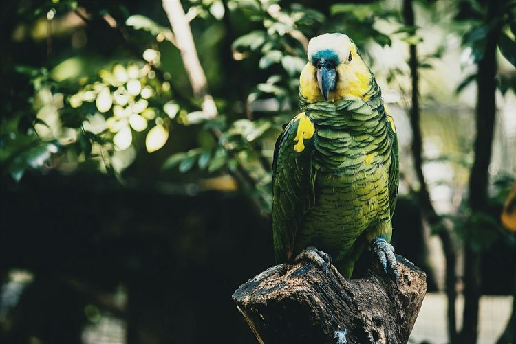 Close-up of parrot perching on wood