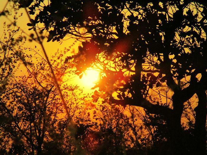 Sunshine EyeEm Pastel Power Sun Shadow Trees Showcasemarch sunset sun clouds skylovers sky nature beautifulinnature naturalbeauty photography landscape @sekharchinta , Hyderabad India