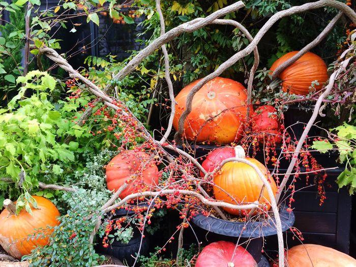 Close-up of pumpkins against orange plants in yard