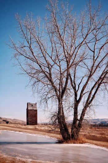 Bare tree by building against clear sky