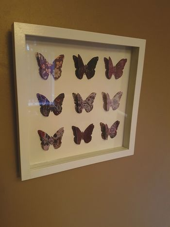 Picture Photo Frame Butterfly Butterfly ❤ Butterflies Butterfly Collection Butterfly Wings Pictureframe
