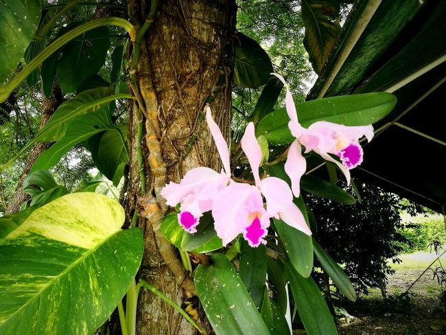 Orquideas del Tolima colombiano First Eyeem Photo