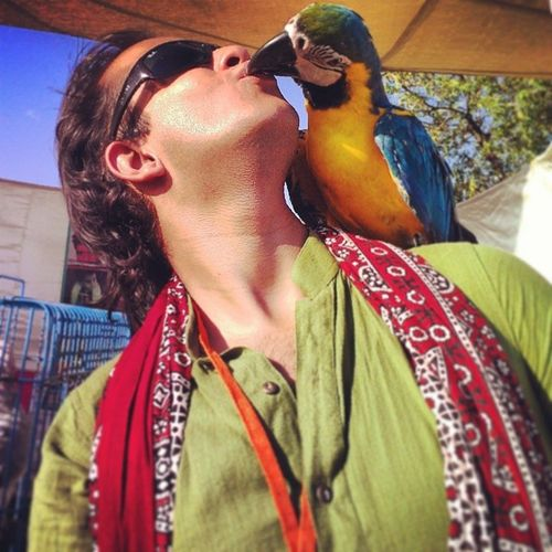 One heck of a KISS!!! Sexy Slurpy Sweet Lovely kiss toomuchtongue vibrant colorful picturesque macaw parrot friendly tamed exotic pet bird animalslove petslove karachi pakistan sindh ajrak TheWildlifeExperienceCentre