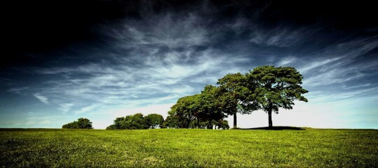tree, nature, scenics, tranquil scene, sunbeam, beauty in nature, grass, woodland, rural scene, heaven, sky, cloud - sky, meadow, green color, landscape, summer, no people, blue, outdoors, thunderstorm, tree area, day