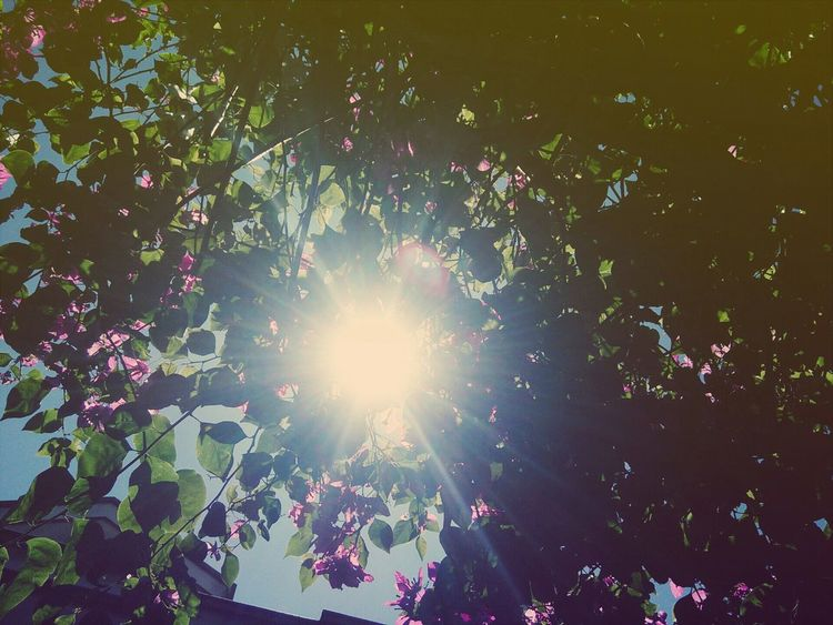 Sunshine ☀ Paperflowers Taking Photos Sky