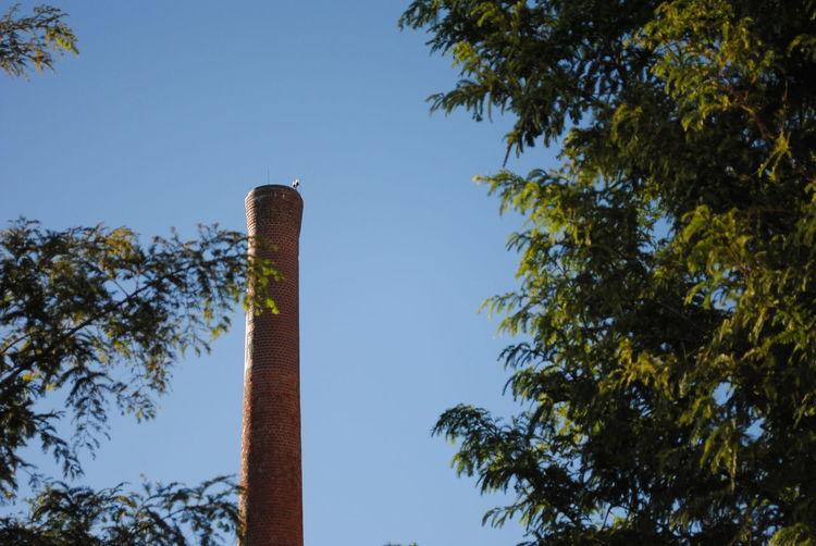 Chimney Toronto