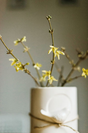 Close-up of white flowering plant in vase
