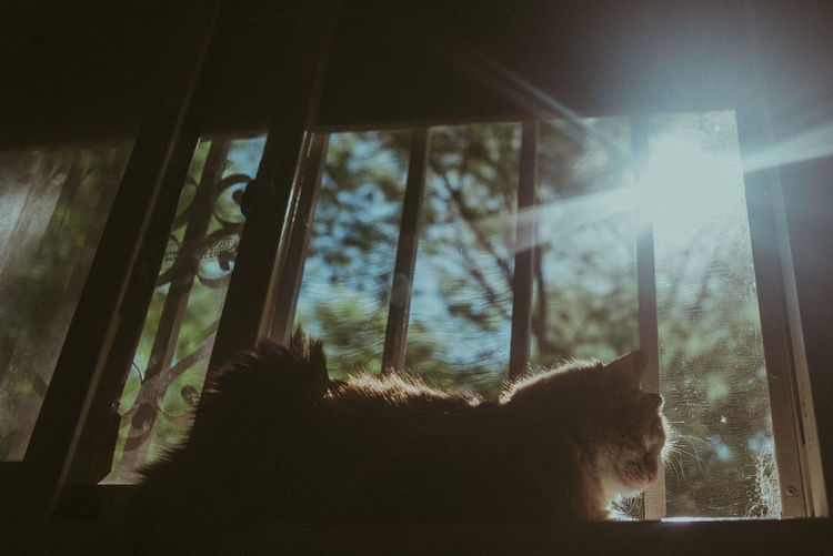 Window One Animal Mammal Animal Themes Glass - Material Animal Transparent Domestic Pets Domestic Animals Indoors  Cat No People Feline Vertebrate Domestic Cat Day Nature Home Interior Focus On Foreground Whisker