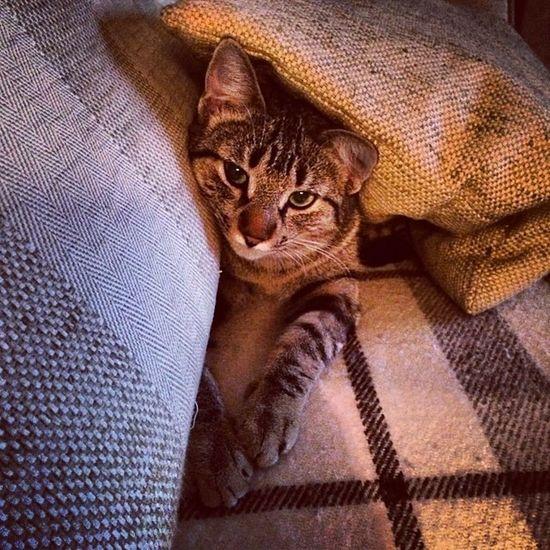 Hidden y calentita... Igersitzi Igerscats Igersanimals Masfotos xperiaZ1