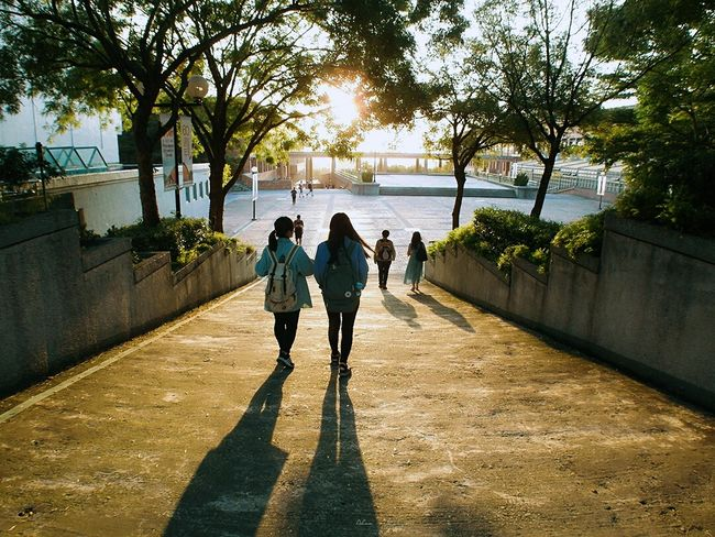 Tree Shadow Sunlight Rear View Walking Silhouette Sunny Sun Sunbeam City Life Person Day Lens Flare Outdoors Bright Pedestrian Walkway Footpath Backlit Summer Vacations The View And The Spirit Of Taiwan 台灣景 台灣情 Sunlight Tinypeopleinbigplaces 臺灣 Hello World