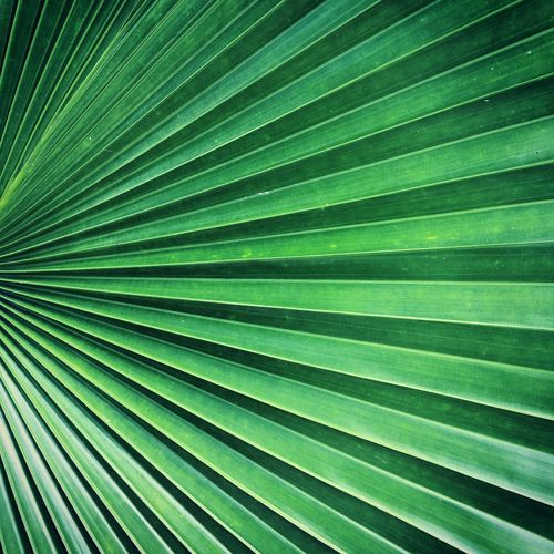 Beautiful pattern of palm leaf. Backgrounds Beauty In Nature Day Full Frame Green Color Leaf Natural Pattern Nature No People Palm Tree Pattern Textured  Tree