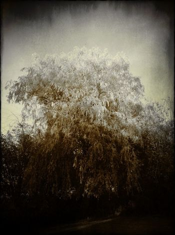 For The Love Of Trees ~ Dreamlands Winter White By CanvasPop