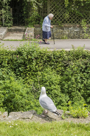 Humor Juxtaposition Perspective Bird Green Color Humour Juxtastreetphoto Old Person Old Person Walking With Cane Old Woman One Animal One Person Seagull Street Photography