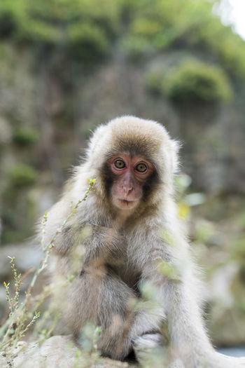 Portrait Of Monkey Outdoors