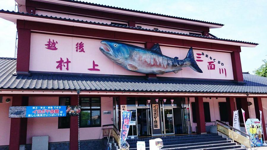 【Niigata,Japan】I