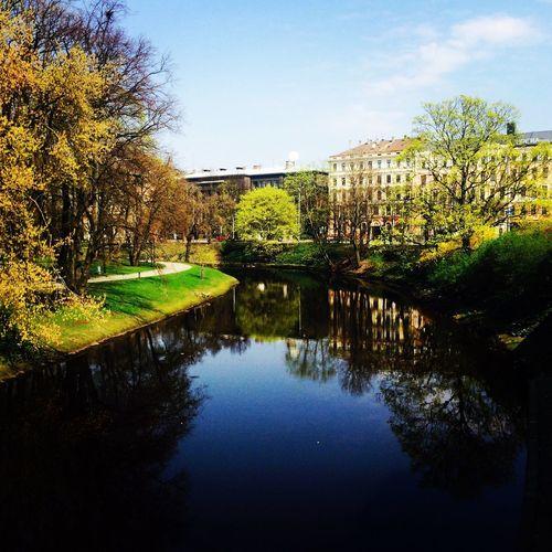 Time To Reflect Riga Latvia Trees