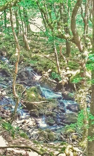 Trees And Nature Trees And Water Beauty In Nature Stream rocks Rocks And Water Welsh Countryside Cader Isris Mountain Hiking