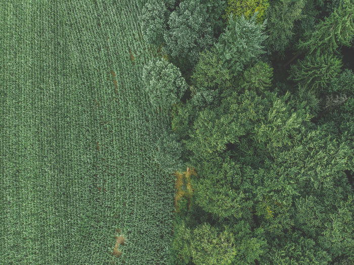 High angle view of trees growing on field in forest